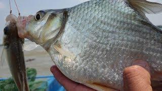 Trúng lớn rồi. Điểm câu mới, mồi mới cá ăn k kịp nắn mồi. Con cá dảnh khổng lồ | săn bắt SÓC TRĂNG |