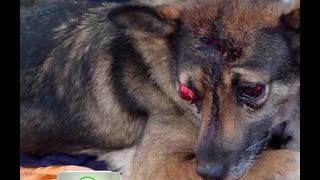В Усть-Илимске хозяин-живодёр искалечил собаку