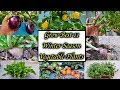 Top 11 Vegetables To Grow Over Winter || Vegetables To grow Outdoors In Winter ( Winter Special )