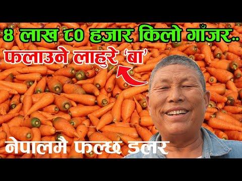 कुखुरा पाल्दा ३० तोला सुन सकेका लाहुरे बा भन्छन्, 'गाँजर खेतीले खुसी फर्कादियो' | Nepal Chitra