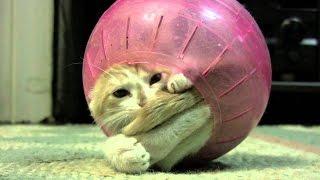 Коты разбойники 28 эп. Кот поймал воздушный шар!