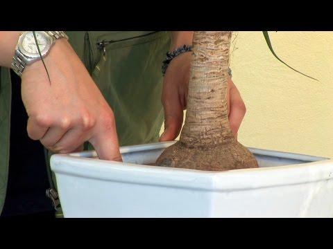 Pflegeanleitung: Zimmerpflanzen -  Bewässerung, Standort, Umtopfen, Pflanzenschutz