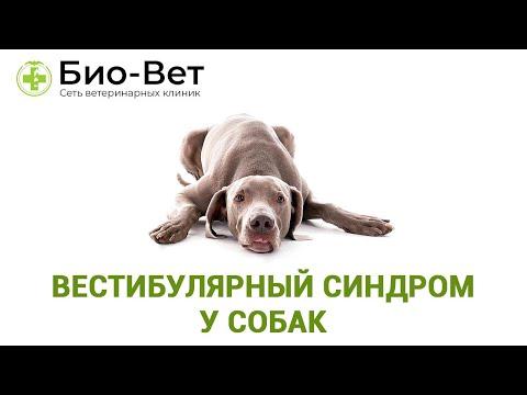 Вестибулярный синдром у собак. Ветеринарная клиника Био-Вет.