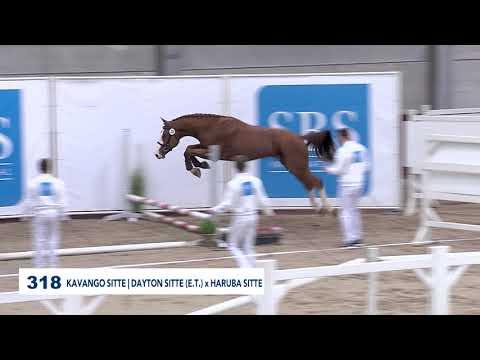 KAVANGO SITTE NEW STALLION  2019