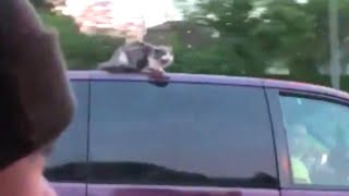 Cat Clings to Life on Hot Van Roof in Nebraska