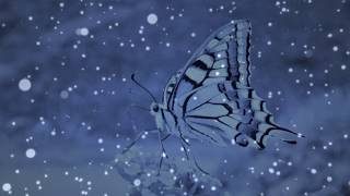 """Bad Dreams   """"Butterfly"""" (from Chrysalis Album)"""