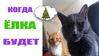 Лютые приколы .Коты ждут ёлку.Угарные мемы.