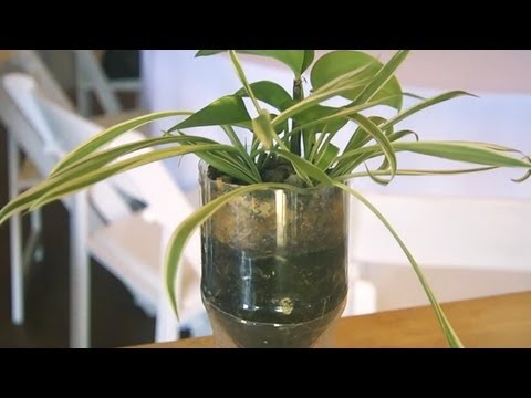How to Make a Soda Bottle Planter at Bean2Blog Event | At Home With P. Allen Smith