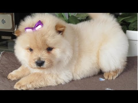 Best DOGS Of OCTOBER 2018 That Will Make Your Month! - Funny Dog Compilation