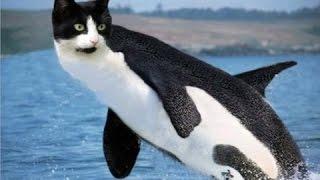 Смешные коты 2017 ТОПОВОЯ Подборка!!! Лучшие Приколы с котами ПРИКОЛЫ С КОТАМИ 2016-2017(CatsLIVE)