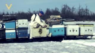 Фильм ужасов о зимовке пчёл
