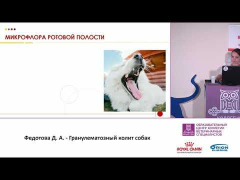Федотова Д. А. - Гранулематозный колит собак