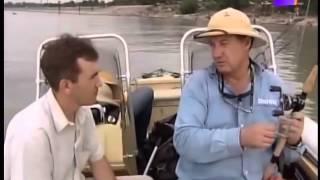 Наживки для сома на реке кубань