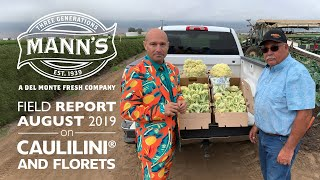 Field Report | August 2019 - CAULILINI® baby caulifllower and Florets