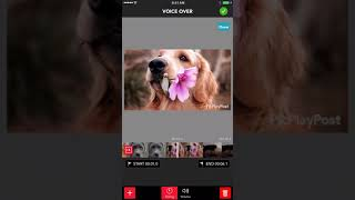 How To Add Voice Over To Your Videos With PicPlayPost Video Editor