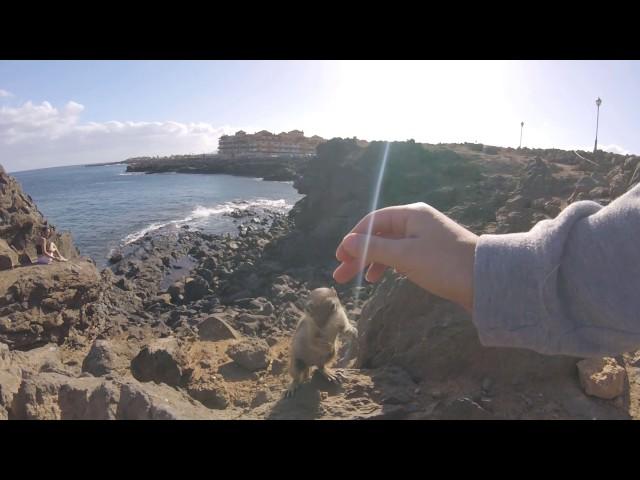 Caleta De Fuste squirrels feeding the chipmunks