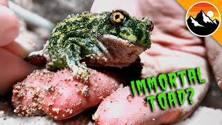 Zombie Toads Rise from the Desert!