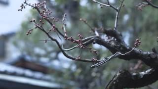 【京都府】老舗カメラメーカーと日本の美の饗宴