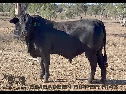 BIMBADEEN Q RIPPER R143 (P)