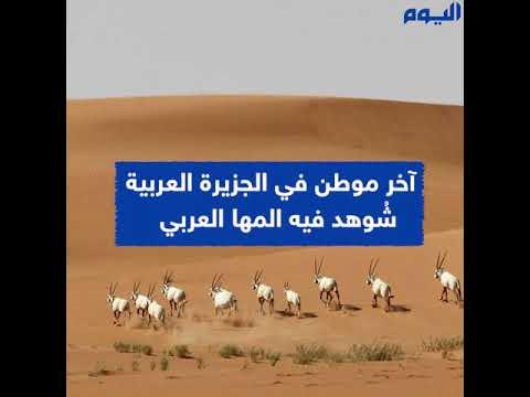محمية بني معارض .. كنز الطبيعة بالصحراء الرملية الأكبر في العالم