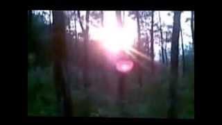 Berjalan Di Hutan Cemara