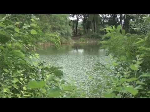 Ryby, rybky, rybičky – 18/2014, premiéra 29.8.2014