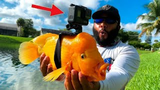 GoPro On A Fish