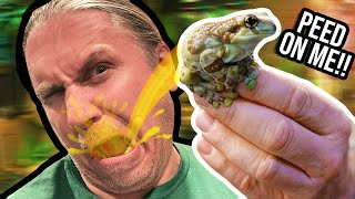 THIS MOSSY FROG PEED ON ME!! MY NEW FROGS ARE INSANE!! | BRIAN BARCZYK