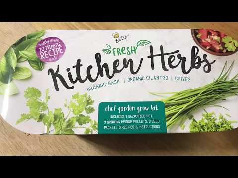 Garden with me!   Buzzy Fresh Kitchen Herbs 🌿