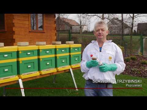 BeeVital Hive Cleaner - zwalczanie warrozy