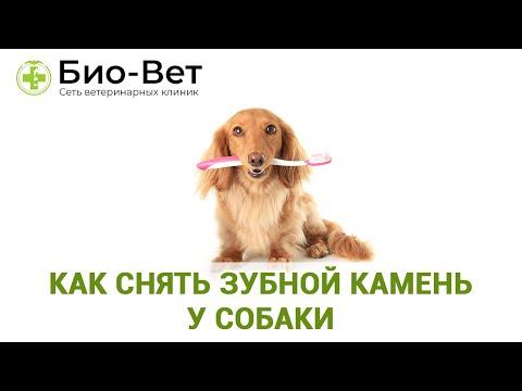 Как снять зубной камень у собаки. Советы владельцам. Ветеринарная клиника Био-Вет.