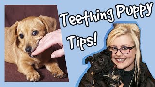 Top Tips for Teething Puppies, How to Help Puppies Teething, Plus Competition!