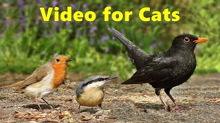 Videos for Cats to Watch - Birds From A Cats Perspective - 8 HOURS of Cat TV