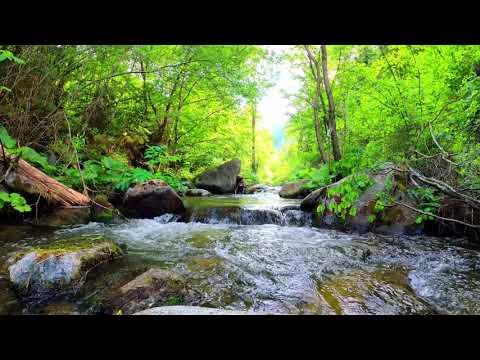 [ HORA DE RALEXAR ] Musica Relaxante Para Meditar ao Som de Agua Corrente na Natureza.