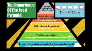 Importance Of The Food Pyramid