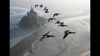 Смотреть онлайн Полет с утками над замком