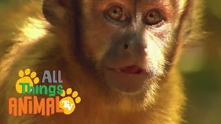 * MONKEY * | Animals For Kids | All Things Animal TV