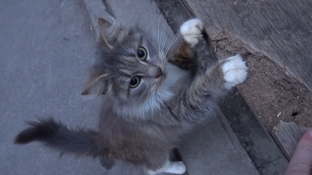 Cute cat wants food for her and for a friend