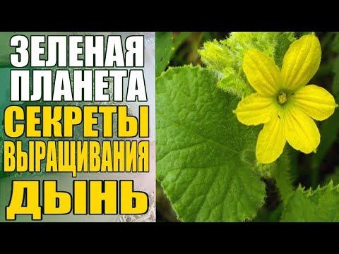 Напиток для быстрого похудения с имбирем и лимоном