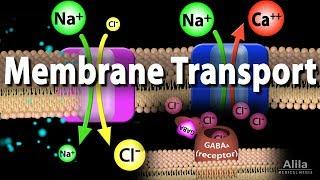 Membrane Transport, Animation