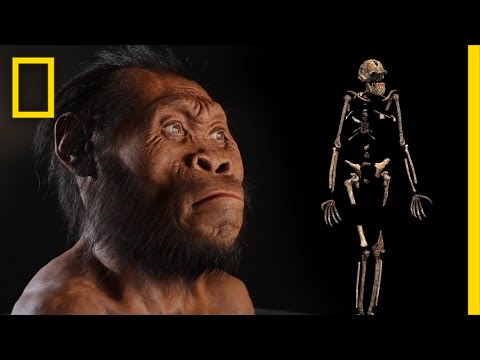 New Human Ancestor Discovered: Homo naledi (EXCLUSIVE VIDEO) | National Geographic thumbnail