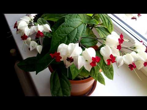 ТОП 10 самых неприхотливых красивых комнатных растений, простых в уходе