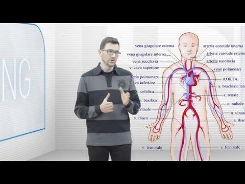 Gli impianti di trattamento della colonna vertebrale lombosacrale