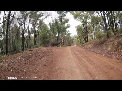Emu-sing