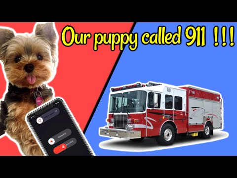 Our puppy called 911 on us!!!