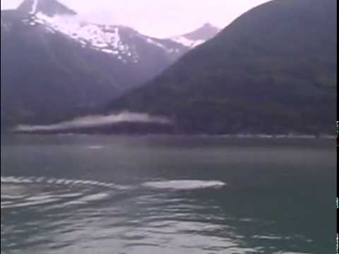 Ballenas bebes en aguas frias alaska