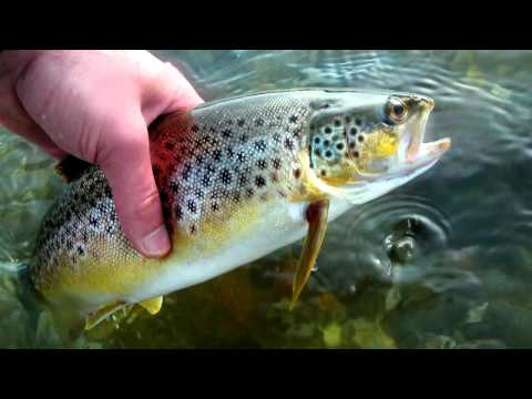 trout fishing spinner trout fishing rods trout pond fishing