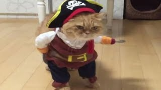 Funny CATS In COSTUMEs Compilation - Funny Fails Videos 2019