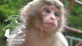 Explore Snow Monkey Town -Spring-