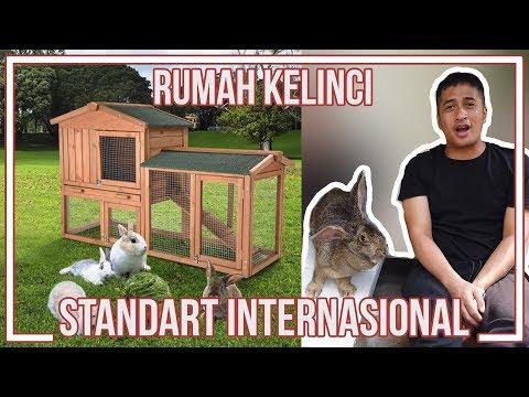 RUMAH KELINCI MEWAH STANDART INTERNASIONAL..!